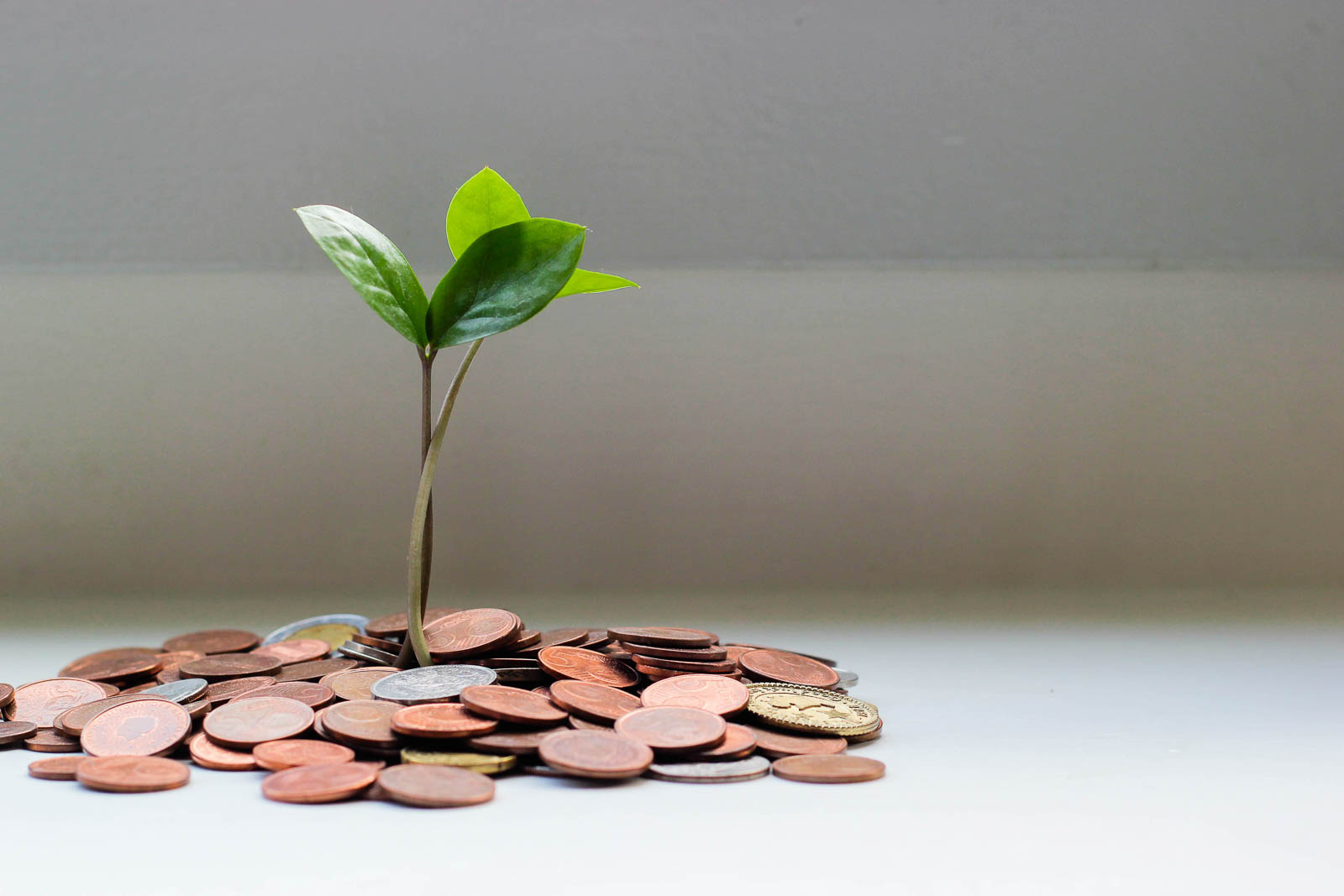 geld-met-plantje.jpg